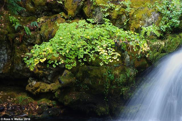 Streamside Greens