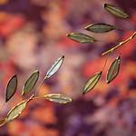 Metal leaves. HMM!