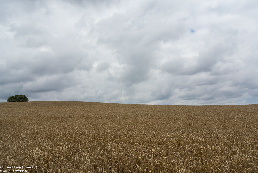 Cornfield (Explored)