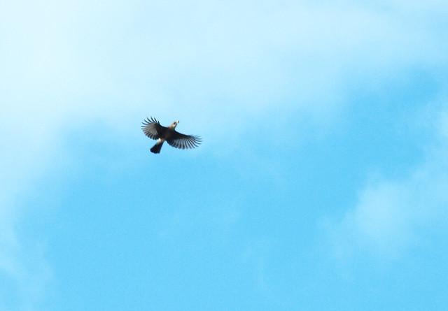 Abflug Eichelhäher