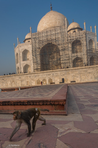 The Taj Mahal's beauty attracts tourists from all corners of the world | by Phil Marion (173 million views - THANKS)