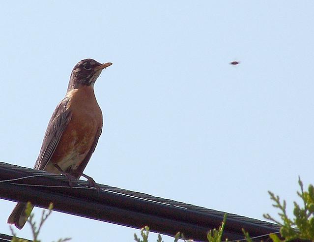 Robin and a UFO