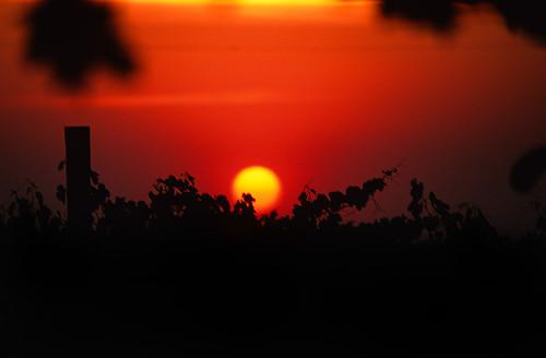 sunset washington vineyard velvia abeja wallawalla