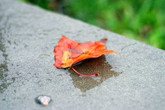 first fall leaf | by smitten kitchen