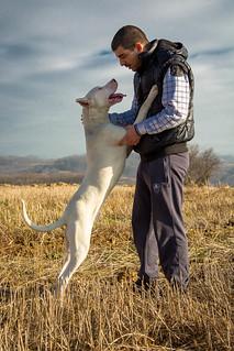 Dogo argentino | by amilutinovic18