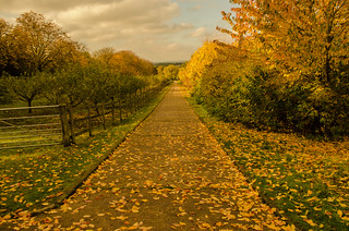 Darenth Country Park | by James W Atkins