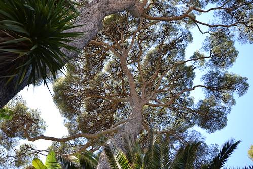 (13) Le Parc du Mugel et son jardin exotique - La Ciotat 33147950925_295812fca1