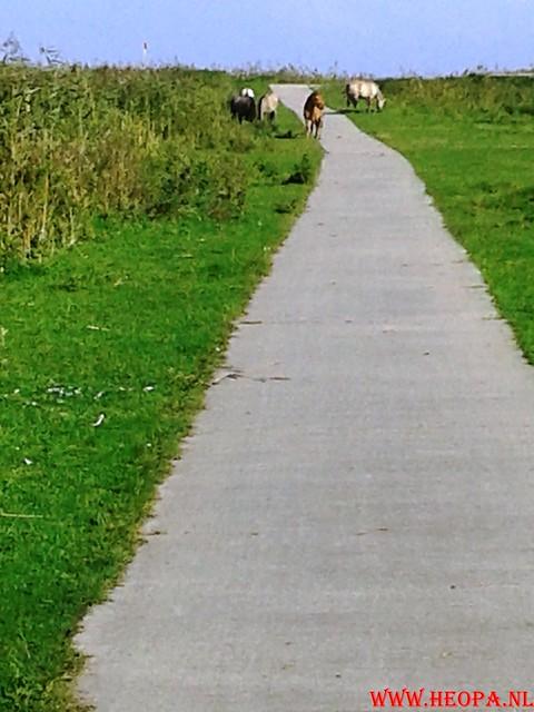 2015-10-09 Test wandeling 26 Km Oostvaarders  (11)