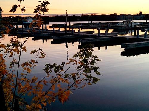 trees water sunrise waterfront calm smartphone serene