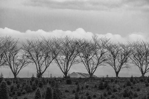 trees clouds hillsboro oregon bw usa