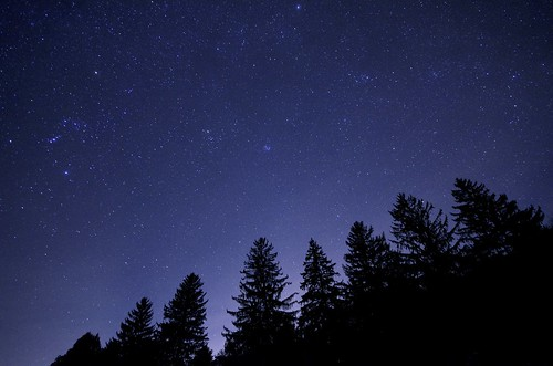 stars spruce trees forest sky constellations orion taurus landscape nightscape astrophotography