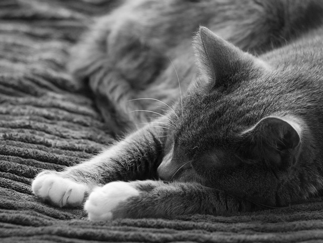 blissful nap