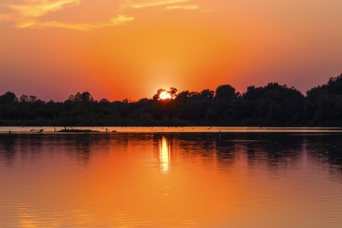 trees sunset red sun heron reflections louisiana sony silhouettes peaceful tranquill redriverwildliferefuge a7rii bossierxity
