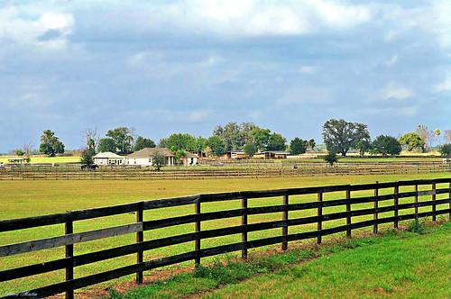 field rural florida farm fences pasture ocala