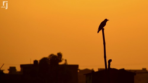 rehanjamil rjclicks nikond5100 nikon d5100 rehanjami sunset sunlight silhouette evening yellow golden orange pakistaniphotographer photographerindammam photographerinkhobar pakistani pakistan islamicrepublicofpakistan punjab islamabad
