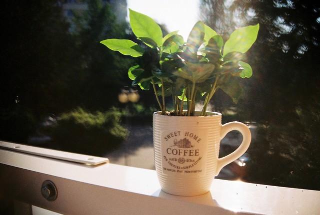 Coffee in Progress :)