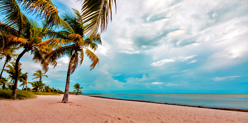 keys keybiscayne miamifl seashore beachscape beach blue walking waterways exploration coconuttree outdoors tourism