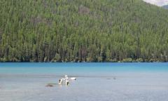 Montana Glacier NP Bowman Lake dog (#0212)
