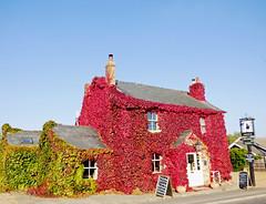 Autumn Leafy Pub Rampton Oct 2015
