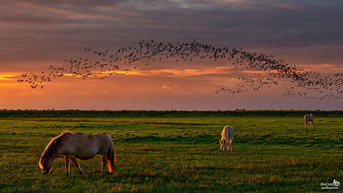Horses and Birds | by BraCom (Bram)