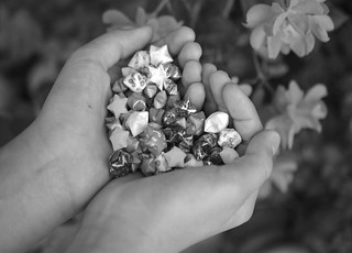 Handful of Stars | by augustinecollective