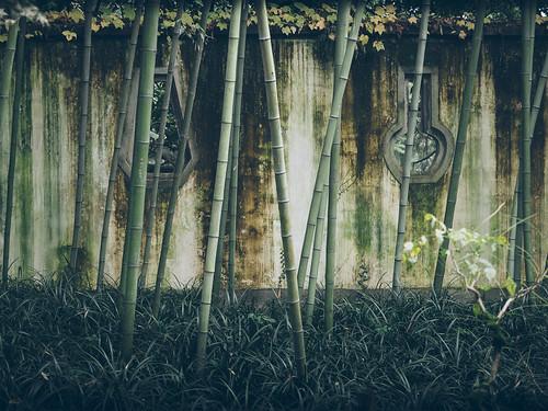 china park travel autumn windows fall wall fence garden asia g olympus bamboo westlake hangzhou omd openings olympus1240mmf28 em5mkii