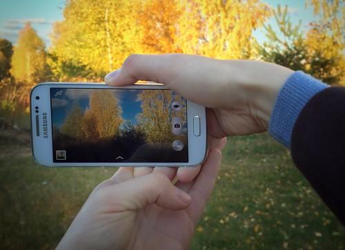 autumn yellow golden phone belarus viewfinder picturing