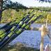 oars on charles_7660