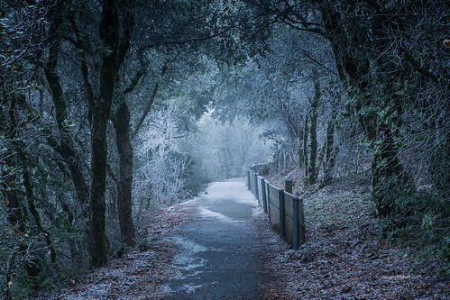 road trees mountain snow ice nature wet forest landscape diablo mtdiablo sergeybidun