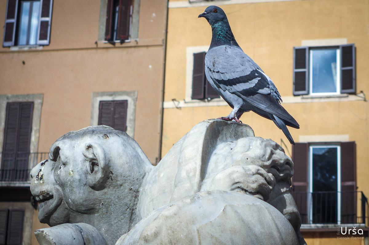 Rim, Vatikan