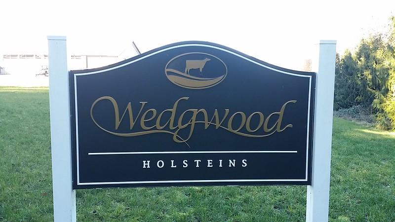 Wedgewood 3D
