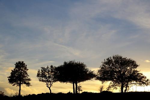 italia sardegna tramonto sunset albero madau tree canon760d fabriziolucchese italy italien sonnenuntergang