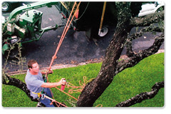 tree-removal-13 | by Sean S Shriver Tree Care