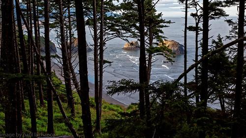 ocean seascape tree beach oregon forest landscape coast dxo canonef24105f4l