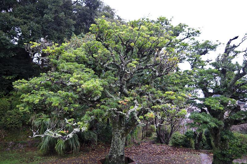 Sur l'île d'Hirado