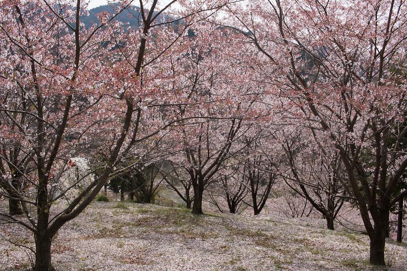 20150412-甲州高尾山-0454.jpg