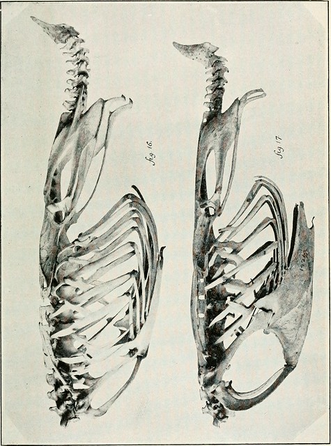 "Image from page 138 of ""The Emu"" (1901)"