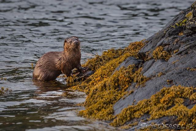 Otterwatch