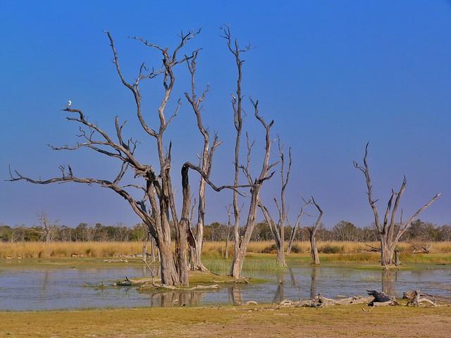 Paisaje de Moremi en Botswana