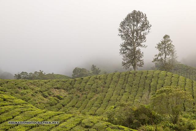 Beautiful Cameron Highlands - tea capital of Malaysia