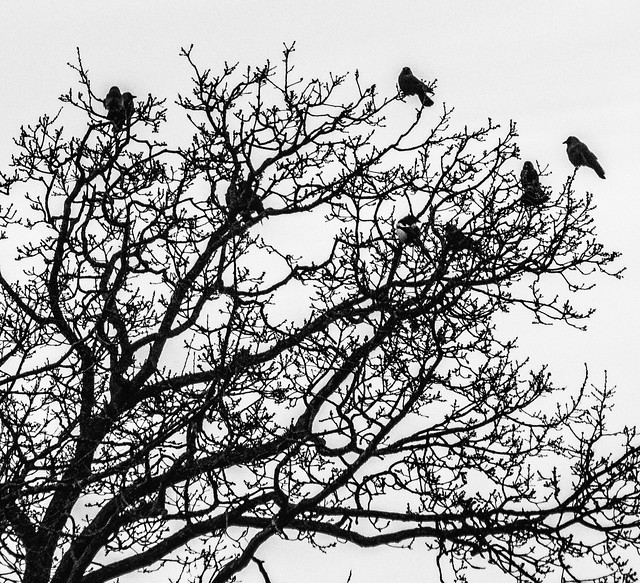 Birds in December tree
