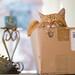 Ginger cat in a cardboard box