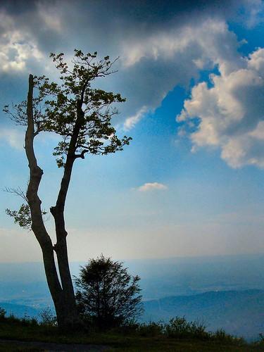mountains tree nature silhouette nationalpark naturescenes shenandoahnationalpark supershot kodakz760 calendarshot interestingness33 i500 explore5jun06 drewmyers top10nature abigfave 12from2006 drewmyersphotonet