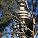 Image: Gimme a Tower Among the Gum Trees