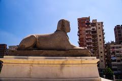 Sphinx, Pompeys Pillar