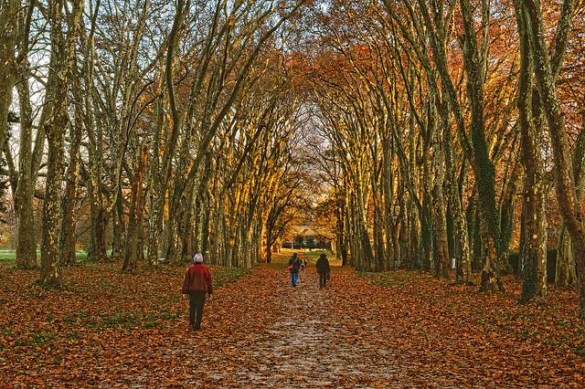End of autumn time, Colombier, Canton of Neuchâtel, Switzerland . La fin de l'automne .   No. 2158.