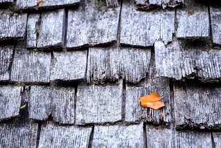 Leaf On A Roof | by dkinner