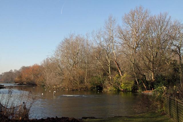 2013-02-19 215 V1 London Royal Parks St James's Lake island
