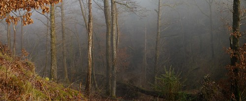 wales mountains breconbeacons valeofneath ystradfellte waterfallcountry mellte winter mist morning woodland bbcwalesnature
