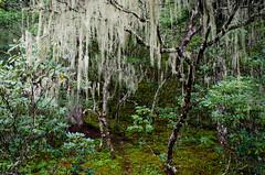 Parque nacional Pudacuo